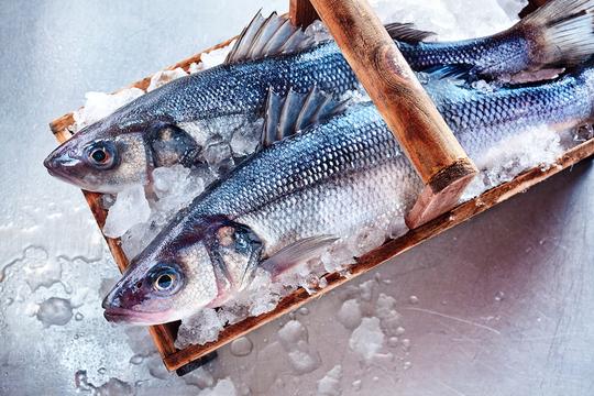заморозка рыбы